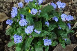Blumen OGS 003 (640x427)