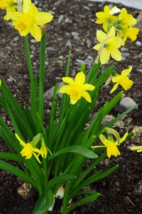 Blumen OGS 004 (427x640)